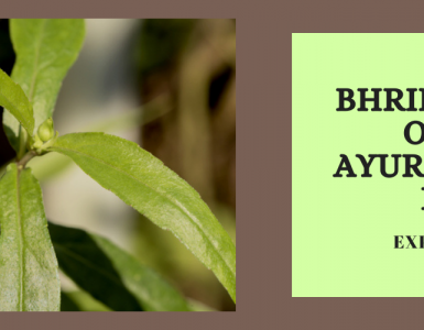 Bhringraj Hair Oil- The Ayurvedic Hair Elixir